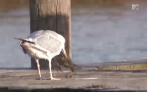 I'm sure this isn't the only crab-eating go on at the Jersey Shore.