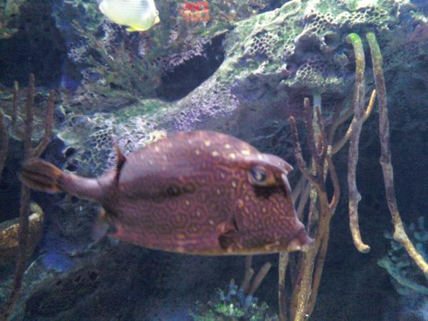 The Best Of Nj Adventure Aquarium